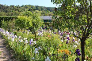 jardin fleuri villa monet