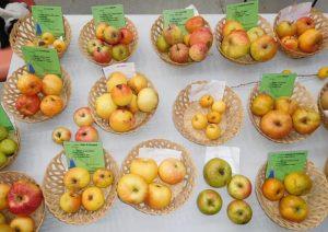 concours pommes