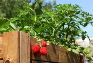 bac à fraisier