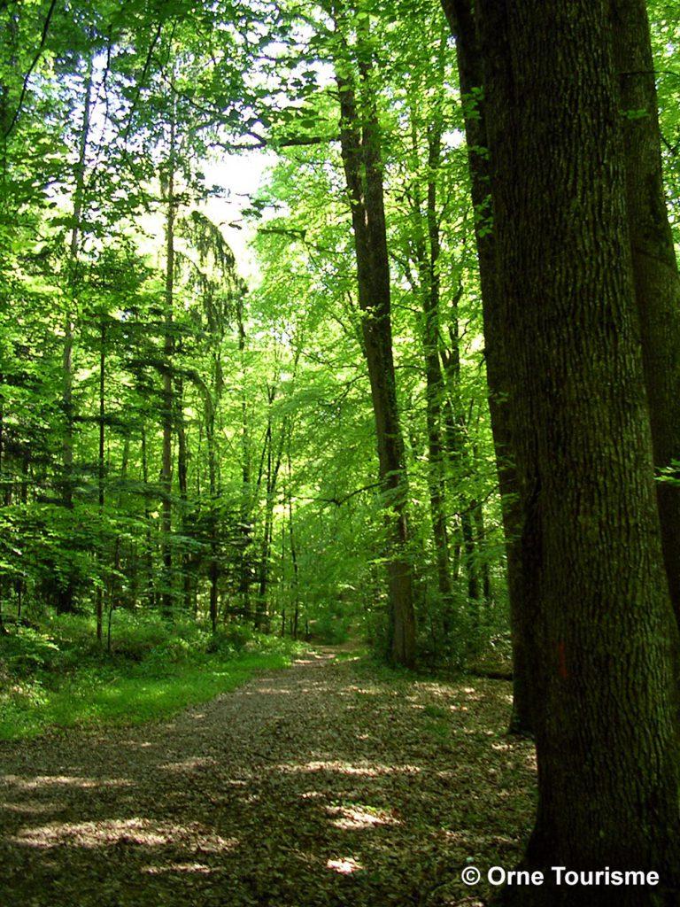chemin forestier orne
