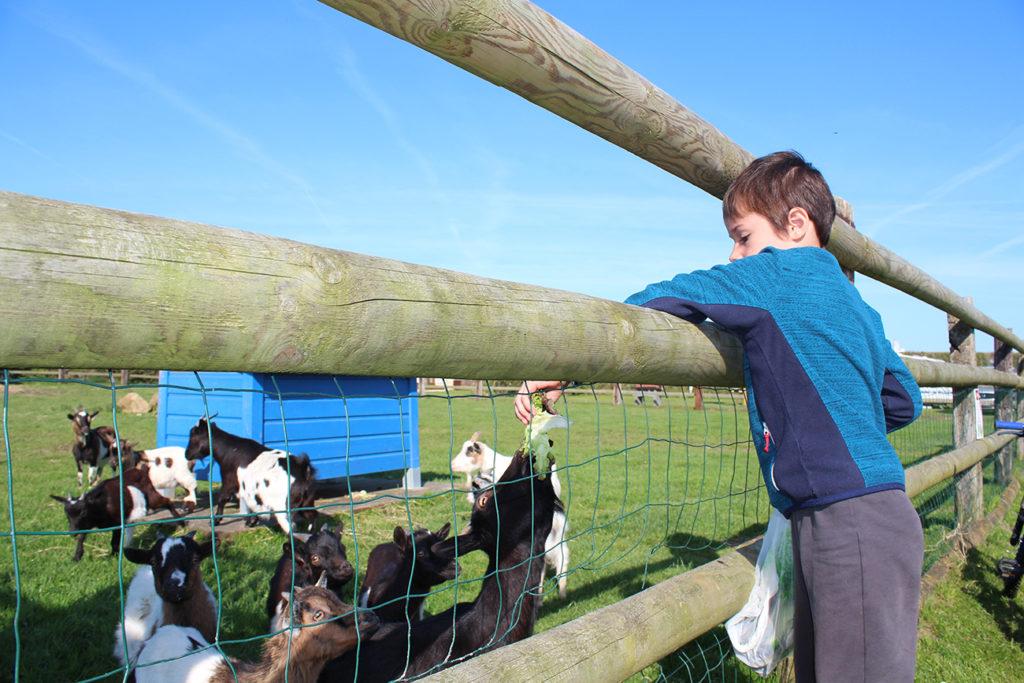 camping mini ferme chèvres