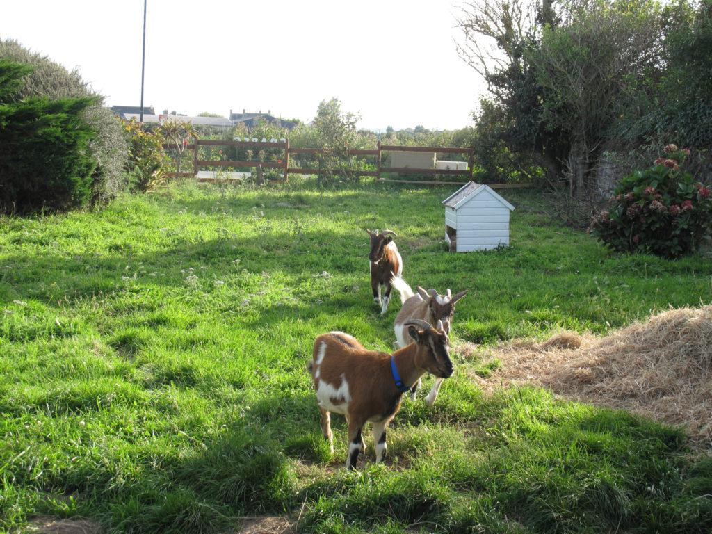 Mini ferme chèvre