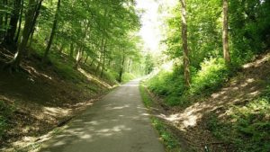 piste cyclable foret