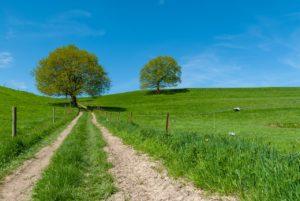vallée, arbre, prairie