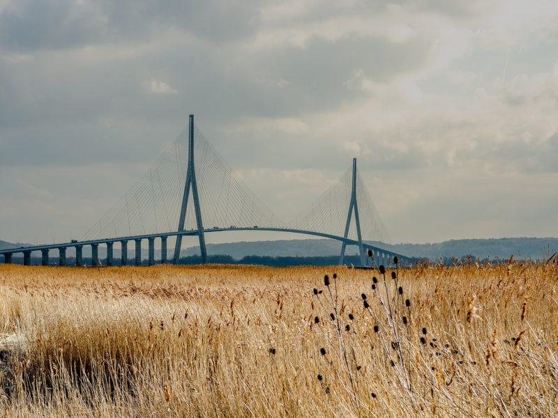 pont de normandie, champs de blé